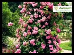 <b>Опора</b> для плетистых роз. Акцент в цветнике - YouTube