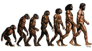evolution happens   interesting stuff about evolution  and    this image does not illustrate the process of evolution  despite the fact that so many people use it to do so  image from http     frontrangeforum org