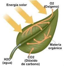 Resultado de imagen de fotosíntesis dibujo