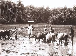 Image result for kerala farm worker 1950