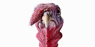 Image result for Turkey