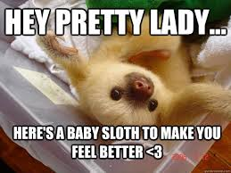 Hey Rasheda... Here's a baby sloth to make you feel better <3 ... via Relatably.com