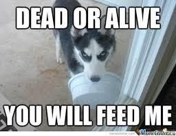 Dead Or Alive. by djoe8 - Meme Center via Relatably.com