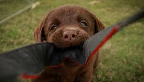 3 Simple Ways To Stop Your Puppy From <b>Biting</b> - Puppy Leaks