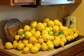 lemon tree x: picked my lemon tree today xthspw picked my lemon tree today