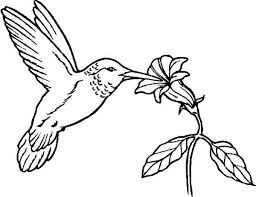Small Picture Humming Bird Coloring Vintage Hummingbird Coloring Pages