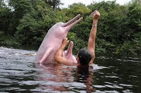 Resultado de imagen de delfines rosados