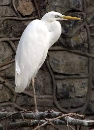 орнитологические исследования в зоопарках и питомниках