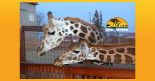 <b>Animal</b> Adventure <b>Park</b> - Home   Facebook