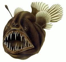 Anglerfish - Wikipedia