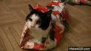 Christmas Kitty GIFs   Tenor