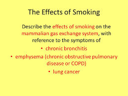 essay on the effect of smoking on gaseous exchange   essay help    essay on the effect of smoking on gaseous exchange   essay help you need high quality essays only