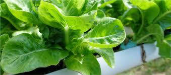 Ferry-Morse Gardening | <b>Free Shipping Non</b>-GMO Heirloom Organic ...