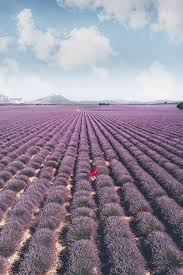 The Ultimate Guide to the <b>Lavender Fields</b> in Provence, <b>France</b>