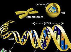 Resultat d'imatges de mutaciones de novo  wigler