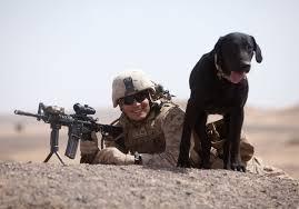 Πολεμικοί σκύλοι-συγκινητικές ιστορίες...