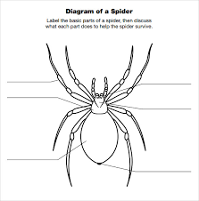 spider diagram template      download free documents in pdfexample of spider diagram template