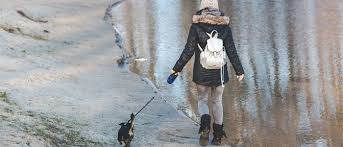 Essential <b>winter dog</b> walking accessories. What you'll need and ...