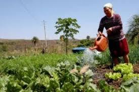 Resultado de imagem para trabalhadora rural