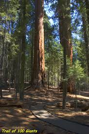 Sequoia National Forest - Trail Of <b>100</b> Giants Trail (Long Meadow ...