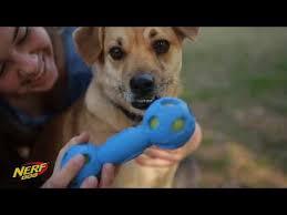 Nerf, Товары для собак