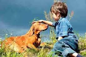 Ποιες είναι οι πιο συχνές ασθένειες του σκύλου;