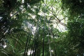Resultado de imagem para ilustração da floresta amazonica