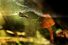 Giyimkent te böcek ilaçlaması