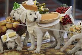 Image result for dogs at thanksgiving dinner