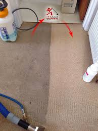 Image result for carpet steam cleaning carpets