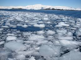 Image result for sea ice