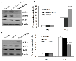 ijerph full text overexpression of skp inhibits the no
