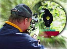 Image result for field target shooting