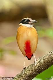 Awesome DIY Method To Make A <b>Bird Repellent</b>   Birds, Bird ...