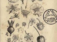 Ботанический рисунок: лучшие изображения (625) в 2019 г.