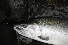 <b>Fishing</b> & Shellfishing | Washington Department of <b>Fish</b> & Wildlife