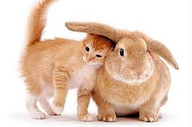 Image result for easter cats wallpaper