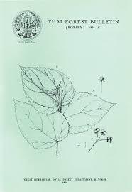 Study in Thai Flora Tiliaceae | Thai Forest Bulletin (Botany)