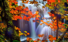 Image result for beautiful leaf near waterfall