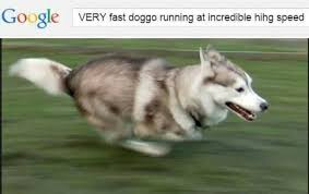 best doggo ile ilgili görsel sonucu