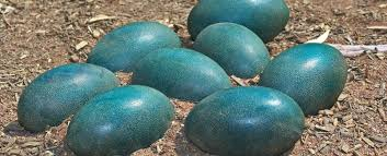 We've Finally Worked Out Why Bird <b>Eggs</b> Are <b>Egg</b>-<b>Shaped</b>