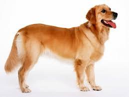 Πότε δαγκώνουν οι σκύλοι;