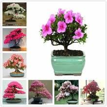 Растительные Цветочные <b>кремы для рук</b> Белый <b>Розовый</b> ...