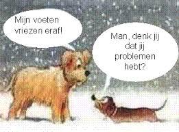 Afbeeldingsresultaat voor hond in de sneeuw