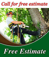 Image result for call today for a free estimate tree services