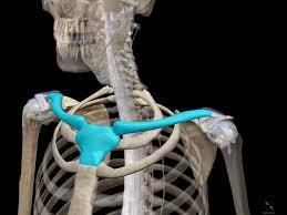 骨格と筋肉を理解して、動作に活かそう『上肢・肩、腕編』