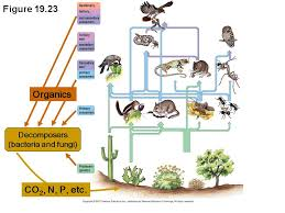 food web diagram examples   printable wiring diagram schematic        ecosystem food web on food web diagram examples