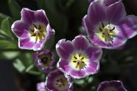 <b>Tower Hill</b> Botanical <b>Garden</b> Photos - Mount Observer