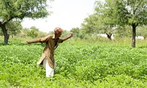 unbelievable pictures of thar desert after the rain com farmers come back out as rain transforms the desert
