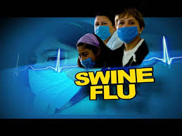 essay on the swine flu in